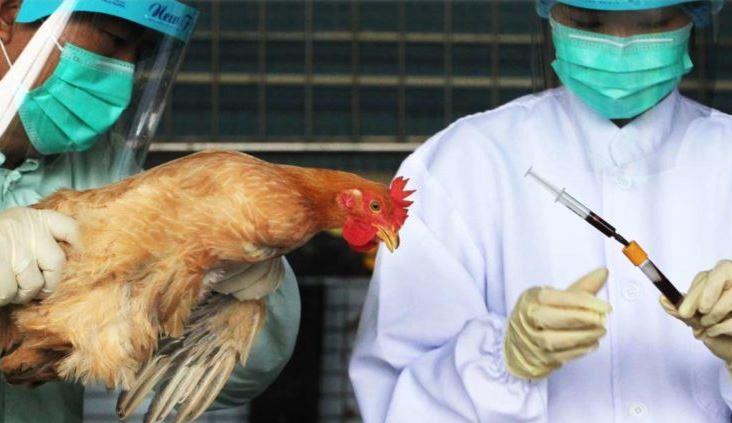 bird-flu-outbreak-spread