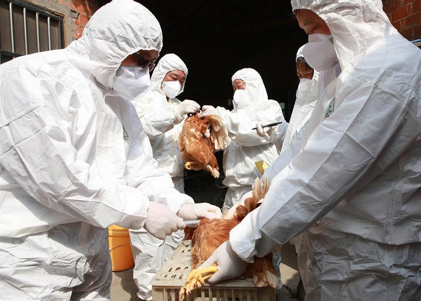 bird flu in human